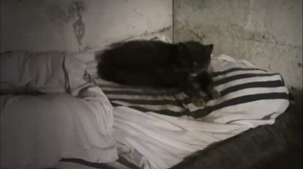 20 лет в подвале! Эта кошечка ждала и хотела быть любимой…