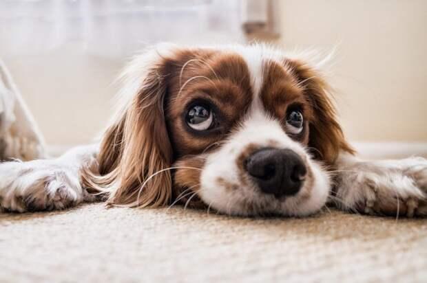 Бесплатно вакцинировать домашних животных от бешенства будут в Мелькисарове
