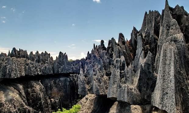 Ученые выяснили происхождение «каменных лесов»