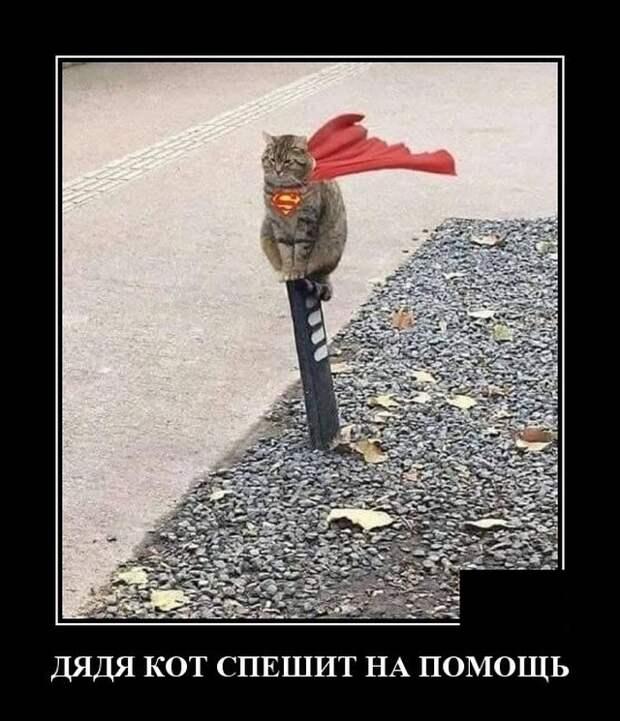 Демотиваторы про кота