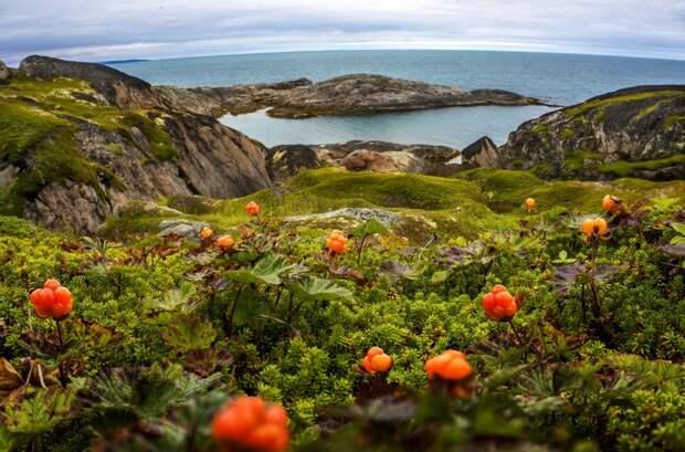 Арктика манит российских туристов