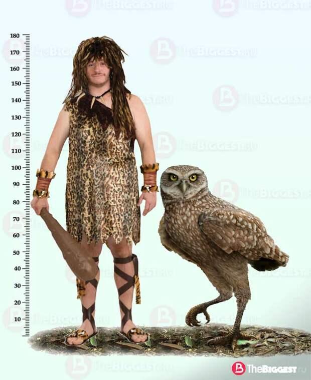 Самые большие совы на Земле
