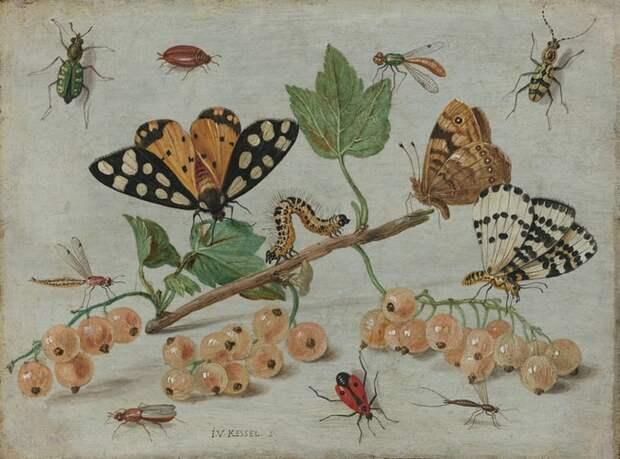 «Мосприрода» подготовила подкаст о насекомых у Молжаниновского верхового болота