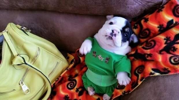 Кроха щенок столкнулся с невероятными трудностями с самого рождения, но рядом были те, кто поверил в него!