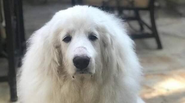 После жизни с жестоким хозяином и его методов «воспитания» пёс оказался в больнице с серьёзной травмой