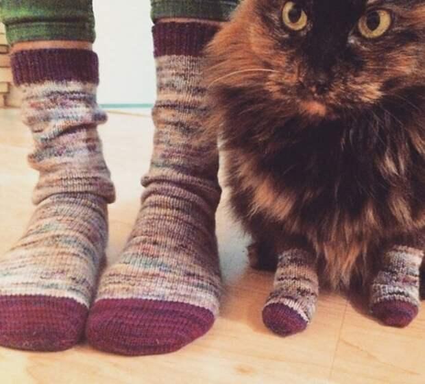 Философия кошачьего бытия в картинках: завидуйте, людишки!