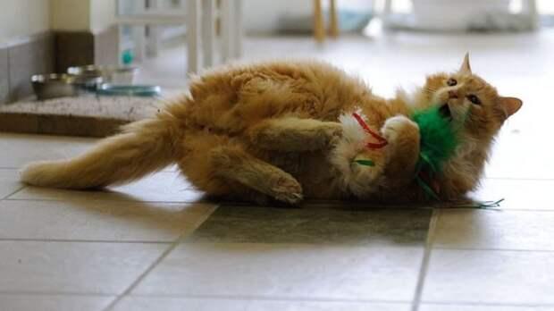 Кот прошел 20 км чтобы найти своих хозяев, но те решили его усыпить