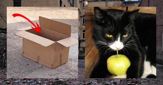 «А под курткой — сюрприз!» Мужчина гулял с собакой и увидел коробку, где кто-то шевелился!