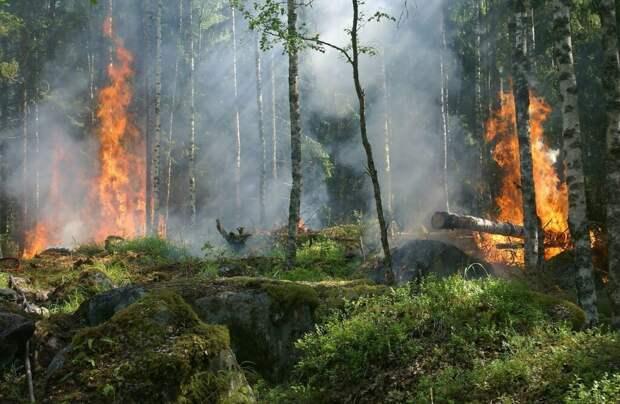 Якутия потратит около 2 млрд рублей на тушение лесных пожаров