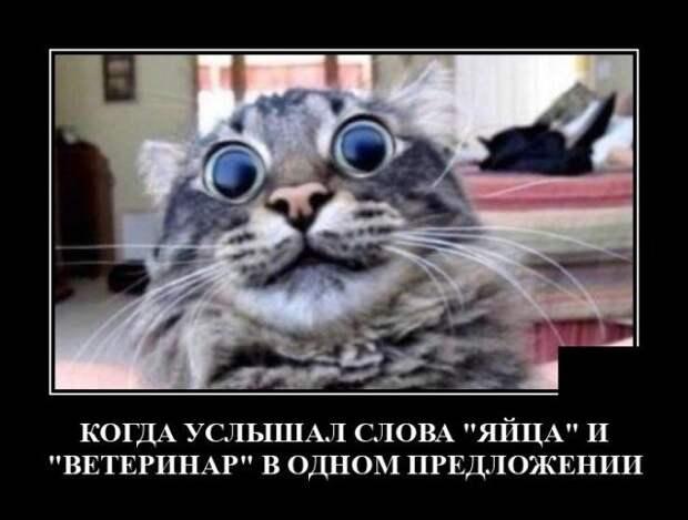 Демотиватор про ветеринара и кота