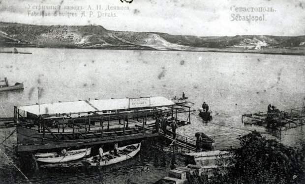 Севастопольские устрицы и научно-технический прогресс