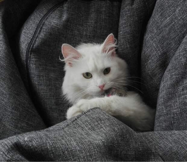 Тощая кошка съела сосиску и с тоской посмотрела на девушку, не особо веря, что та ей поможет