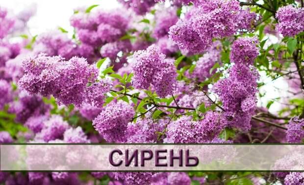 Самые ароматные цветы для вашей дачи