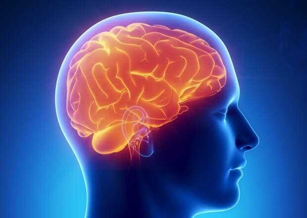 Шесть причин, из-за которых мозг стареет быстрее