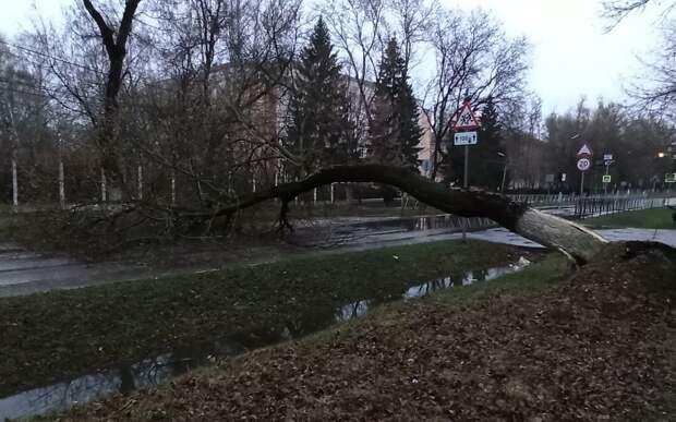 В Рязани на улице Белякова дерево упало на проезжую часть