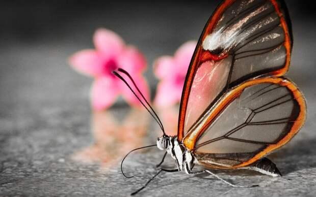 ТОП-8 насекомых, которые могли бы победить в конкурсе красоты, если бы такой существовал