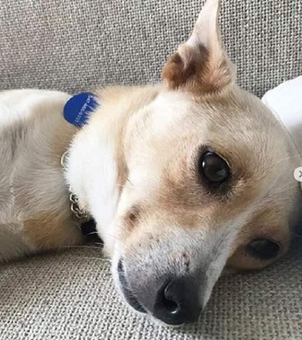 Собака устала