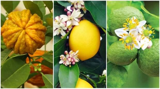«Тройной» одеколон: почему популярное парфюмерное средство имело странное название