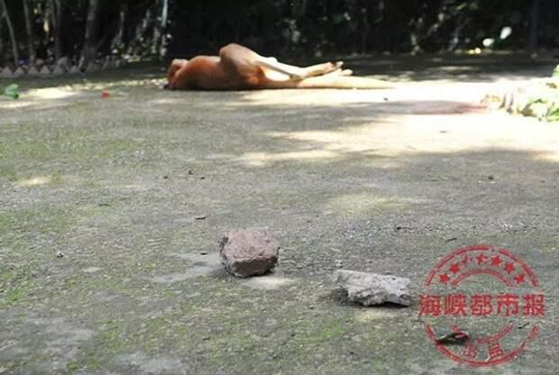 Посетители зоопарка убили кенгуру ради развлечения ynews, жестокое обращение с животными, жестокость, животные, китай, сволочи, фото