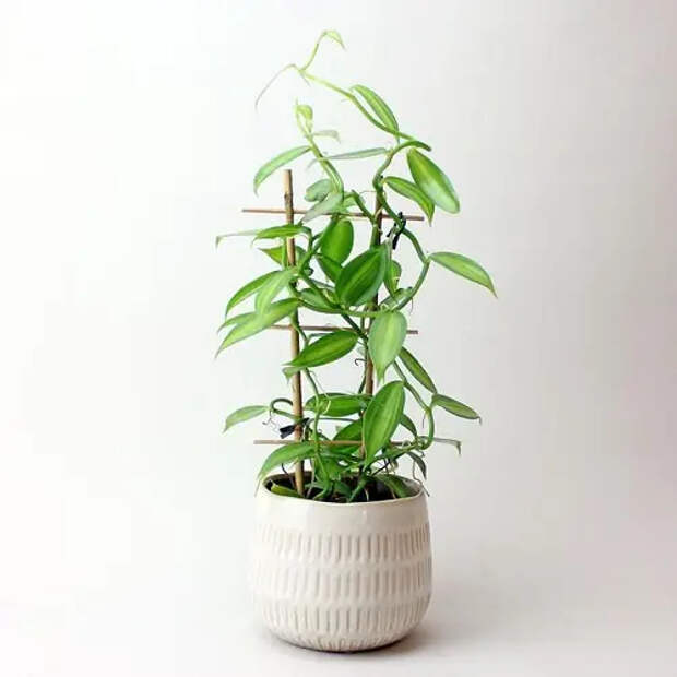 12 уникальных комнатных растений: они могут двигаться и даже стесняться