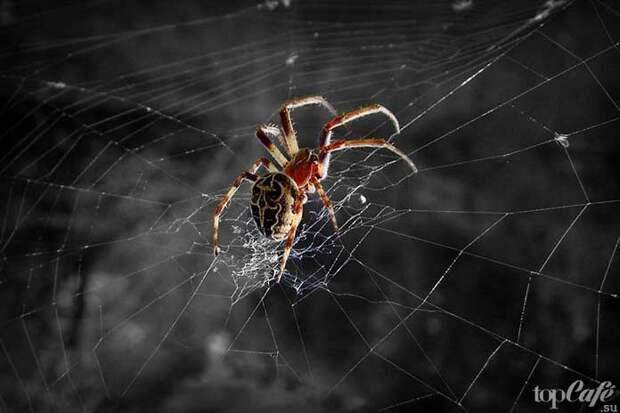 Совет садоводу: от гусениц избавляйтесь, а пауков, наоборот, берегите