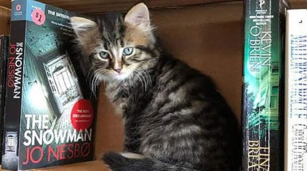 «А на полках не только книжки, но и котята»: канадский магазин помогает найти котишкам хозяев
