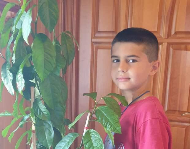Десятилетний мальчик из Ростокина из семечка вырастил лимон