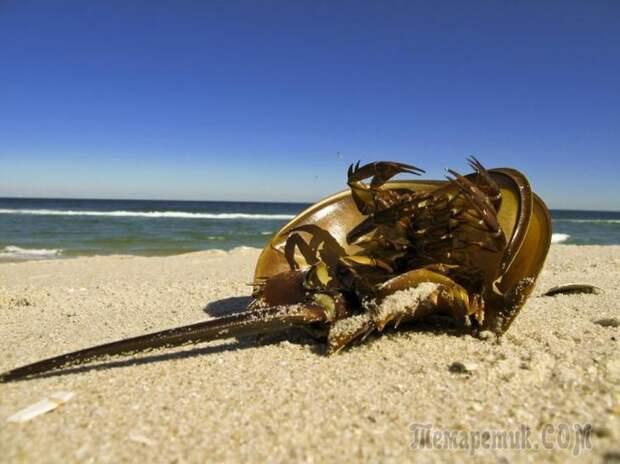 10 видов древних организмов, живущих до сих пор