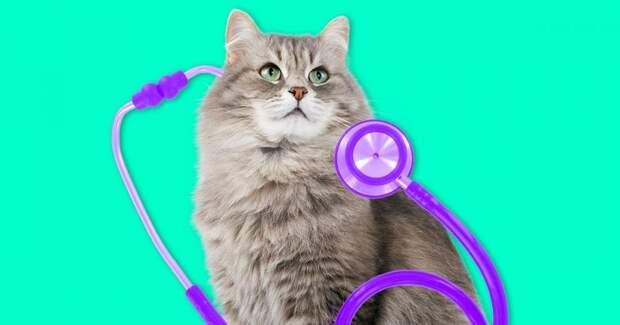 6 болезней, которыми можно заразиться от домашних животных