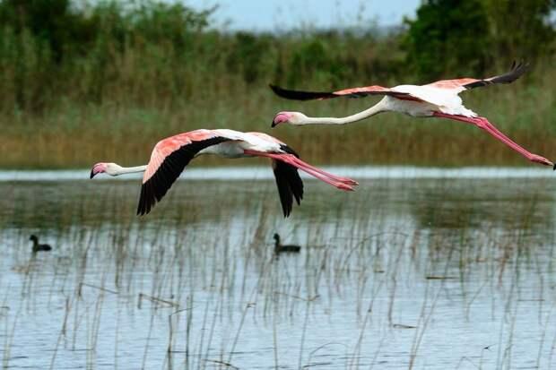 Исимангалисо — рай для птиц и зверей на юге Африки