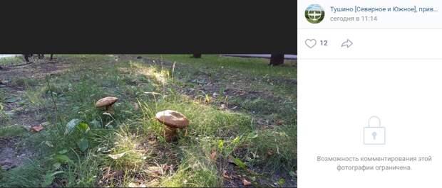 На Нелидовской выросли гигантские грибы