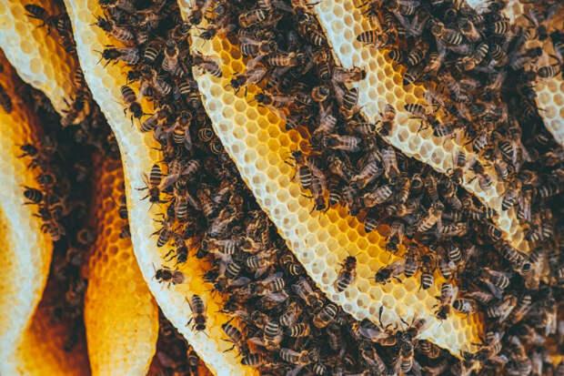 Умышленное уничтожение пчел на Кубани: преступникам грозит срок