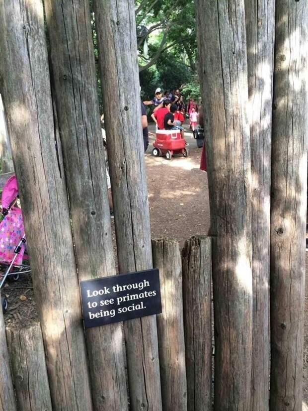 смешные фото зоопарк, зоопарк смешные случаи