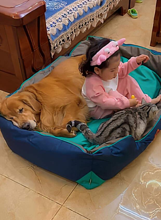 Очаровательное видео с маленькой девочкой, которая укладывает спать песика и котика