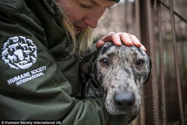 Защитники животных спасли 170 собак от убоя в Южной Корее