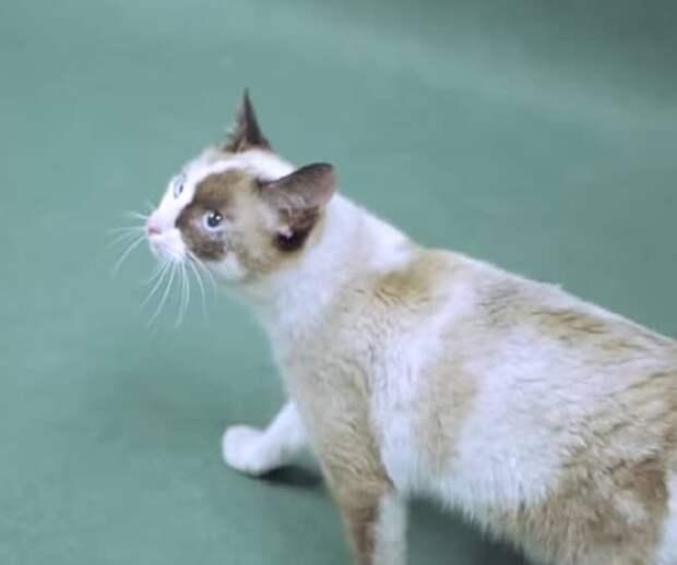 Домашнюю кошку выгнали на улицу хозяева, и она бродила в поисках еды