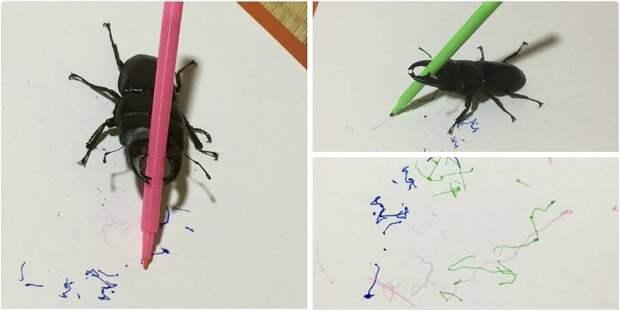 Удивительный зверь кугавата! Питомец этой девушки рисует, поднимает вес, куховарит… и вообще – он очень классный! :)