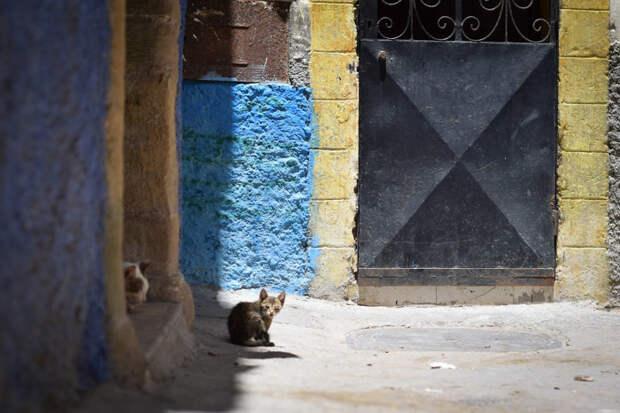 Опухший глаз Эс-Сувейра, город, животные, кот, марокко, проект, фотограф