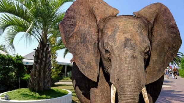 В Сочи сотрудники цирка выгуляли на улице слонов