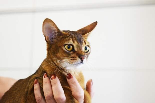 Доставлявшая породистого котенка курьерша избила его на глазах всего вагона