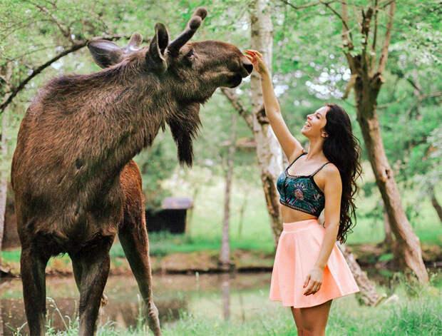 Девушка и лось. Не повторять, это опасно. Фото из открытых источников.