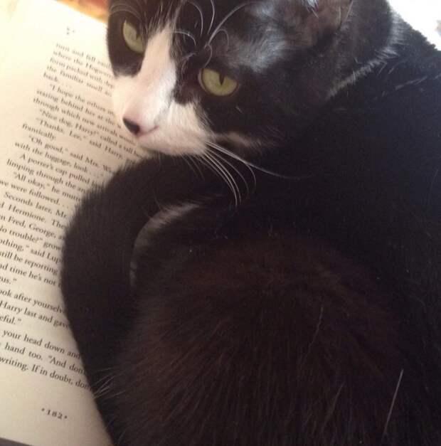 5. Когда решил почитать  жизнь, кошка, ситуация