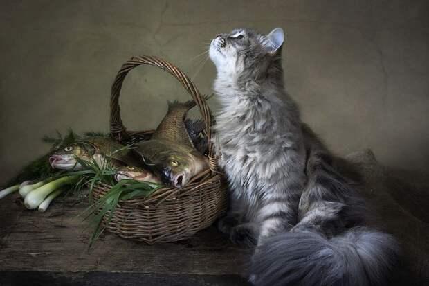 Кот и рыба. Кото-натюрморты Ирины Приходько