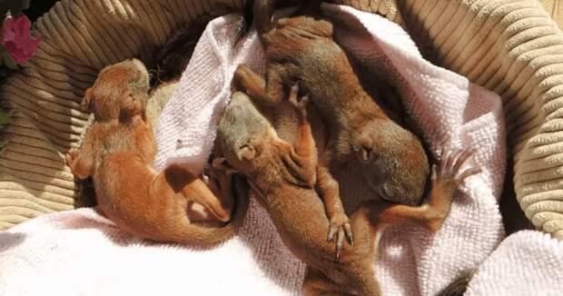 Кормящая кошка бросала новорожденных котят и убегала в лес
