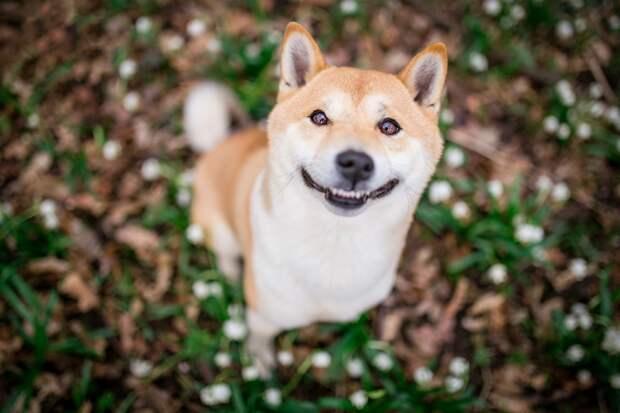 Обои для рабочего стола собака улыбается боке смешной милый животное