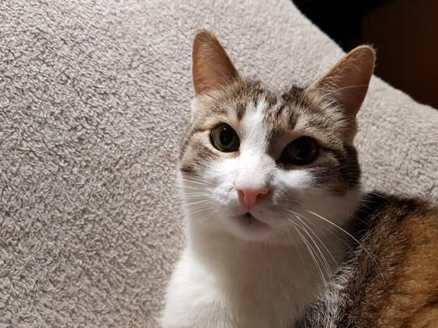 Как кот Жорик стал кормить своего хозяина, когда тот серьезно заболел.