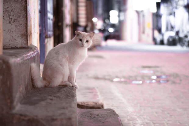 Любопытство Эс-Сувейра, город, животные, кот, марокко, проект, фотограф