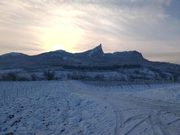 Снежная хватка: Как стихия повлияет на урожай винограда в Крыму