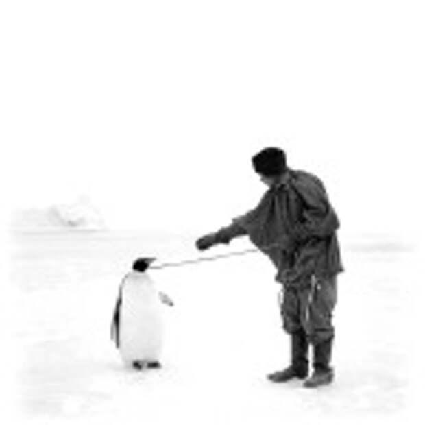 роберт скотт пингвины съедобны экспедиция история