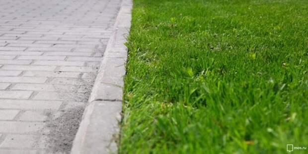 Газон вдоль тротуаров на улице Свободы восстановлен — Жилищник